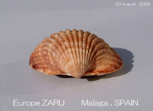 europe-zaru-august-2009-11-300x217