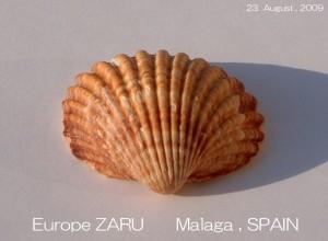 europe-zaru-august-2009-21-300x220